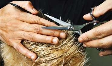 What Is The Perfect Method And Time To Cut Your Body Hair?